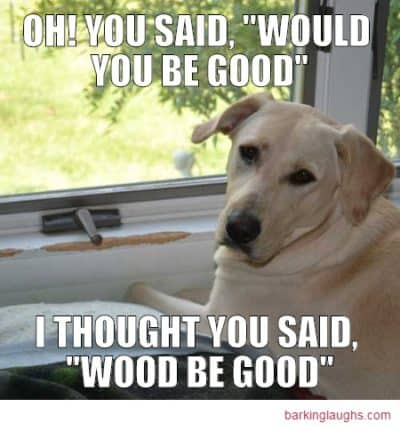 Labrador Dog Meme; Oh you said would you be good, I thought you said wood be good