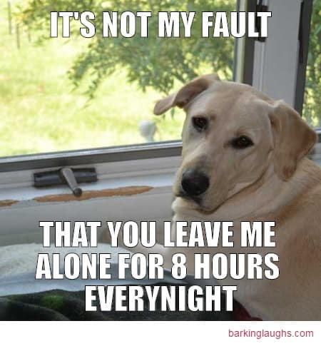 hilarious dog memes with a Labrador Retriever just ate part of the house. It's not my fault that you leave me alone for 8 hours every night
