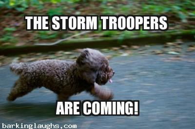 little pooch running that looks like an ewok: hilarious dog meme