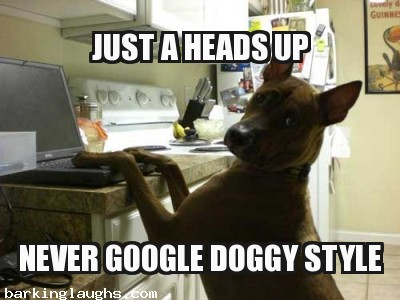 Hilarious dog memes with a canine playing on a computer: Just a heads up never google doggy style