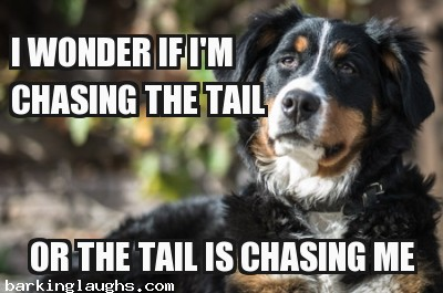 Wonder Dog Meme; I wonder if I'm chasing my tail or the tail is chasing me.
