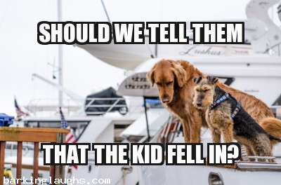 Funny Dogs on a boat dog meme: Should we tell them that the kid fell in
