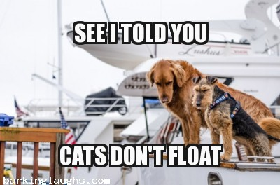 Dogs on a brick Boat: see i told you cats don't float