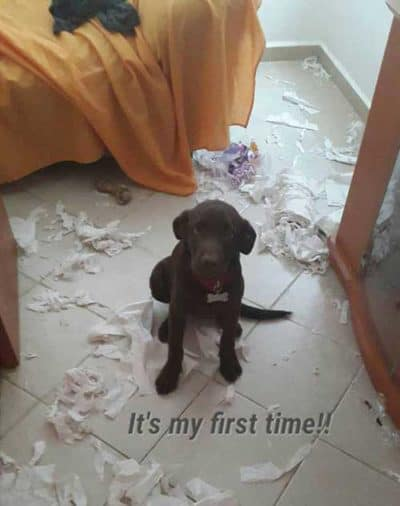 puppy's first time shredding TP