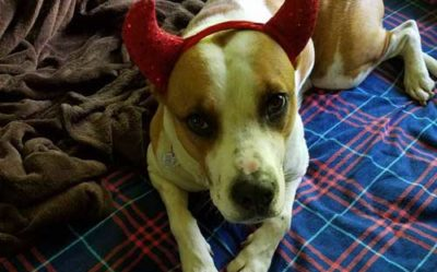 dog shaming time with a canine who dresses up like the devil who barks at 4 am