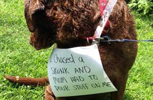 Pooch gets nailed by a skunk in this dog shaming picture