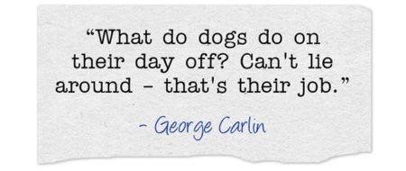 Lazy Dog Quote from George Carlin