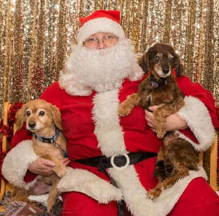 Dog Pictures with Santa Paws with two small funny dogs