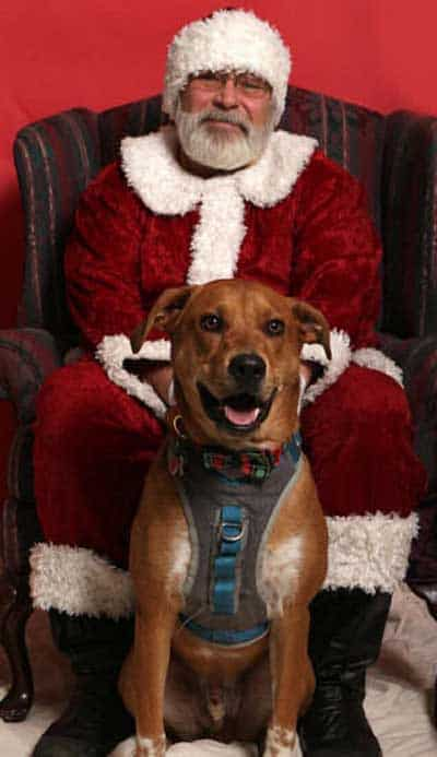 Dog Pictures with Santa Paws with a big pooch