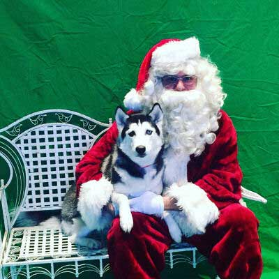 Dog Pictures with Santa Paws with a Husky