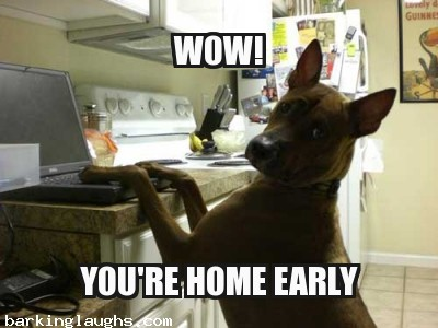 hilarious Dog Memes with Canine computer: wow you're home early