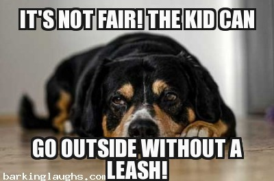 Hilarious dog memes with the Not Fair pooch: It's not fair the kid can go outside without a leash
