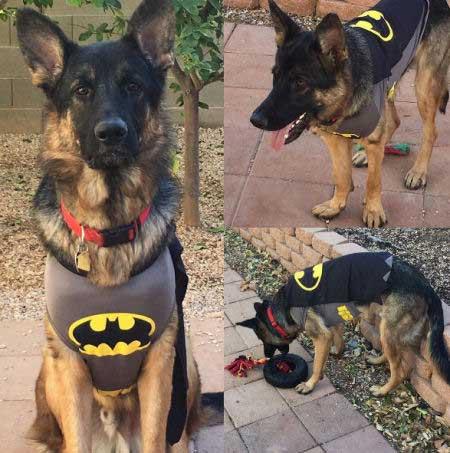 Shepard dressed as Batdog
