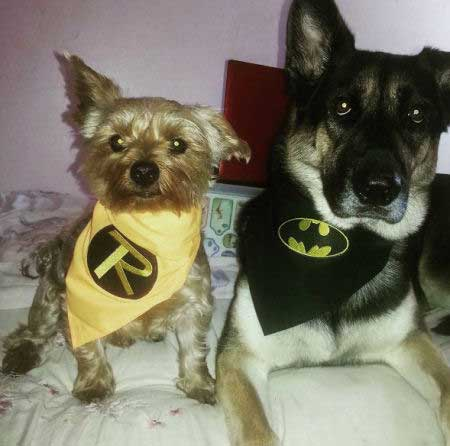 two funny dogs wearing a Robin and Batman Handkerchief