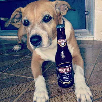 beer for dogs picture of a Dogs Beer drinker