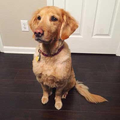 cute dog begging for stuff