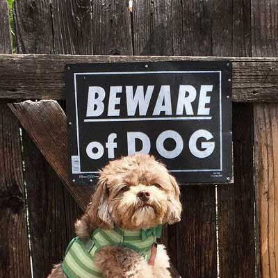 Beware of Dog Sign pictures with a little pooch posing in front of a sign