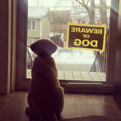Beware of Dog Sign pictures with a small puppy staring out a window