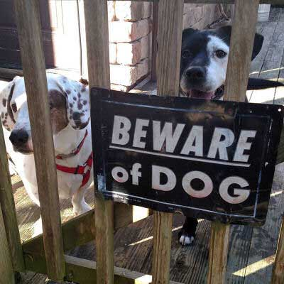 Beware of Dog Sign pictures with two funny dogs standing behind a sign