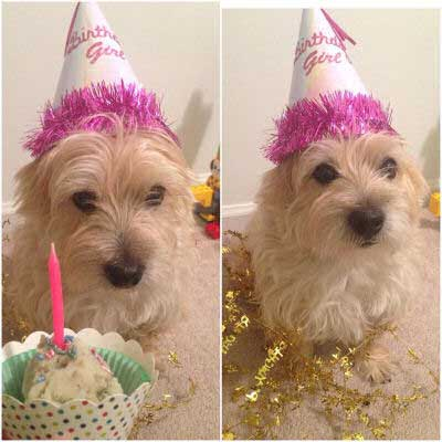 birthday pooch with a cupcake
