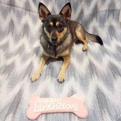 canine with a huge birthday bone