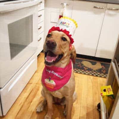 canine dressed up for birthday