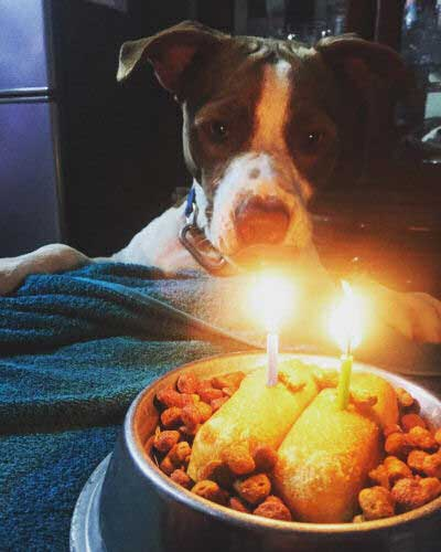 happy dog birthday pictures of a pooch staring at birthday twinkies