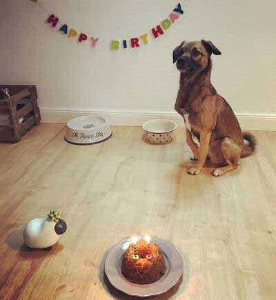 happydog birthday pictures of a Canine standing at attention at his birthday party