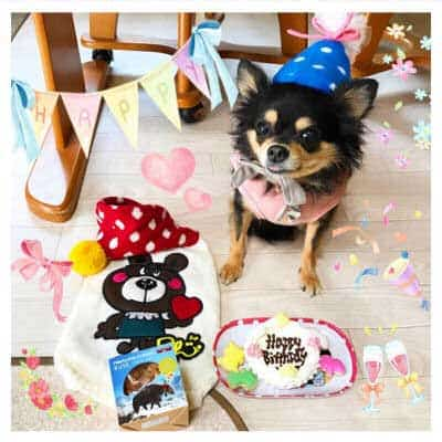 dog birthday pictures of a Small pooch decked out for birthday