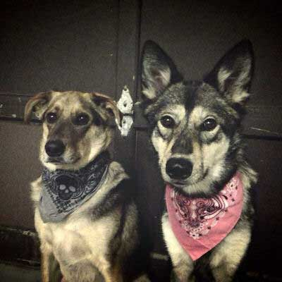 Pictures of Cool Dogs showing two dogs that look like they belong in the wild west