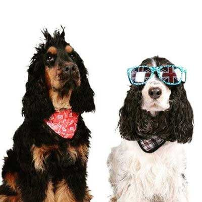 Pictures of Cool Dogs showing two funny dogs dressed up cool and english