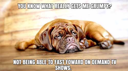grumpy dog meme not being able to fast forward on demand shows