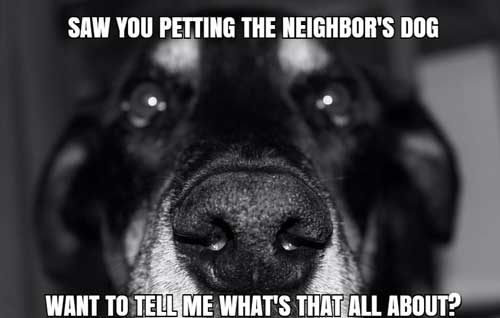 Jealous closeup silly Dog Meme saw you petting the neighbor's dog want to tell me what's that all about