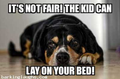 The not fair dog complaining about the bed