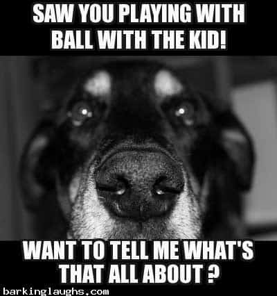 Funny Dog Logic Memes with the Jealous dog : saw you playing with the kid