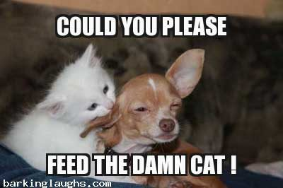 hilarious Dog Memes with a dog asking, could you please feed the cat