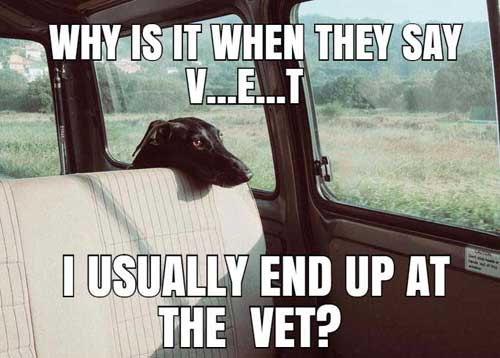 funny dog meme in backseat going to vet wondering