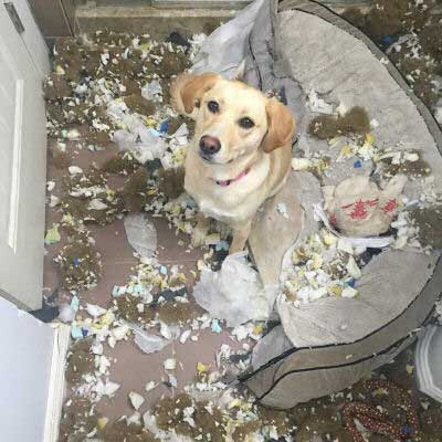 dogs bed shredded