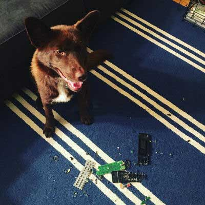 remote control is chewed up