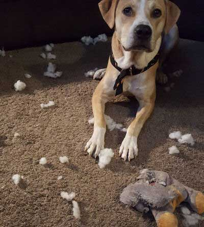 Hilarious Dogs with a stuffed animal is dead