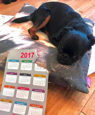 Hilarious Dogs with a calendar with a big bite out of it.