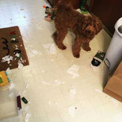 Hilarious Dogs with something got destroyed