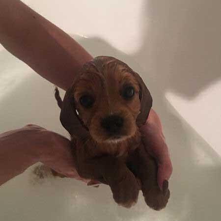 cute little puppy taking a bath