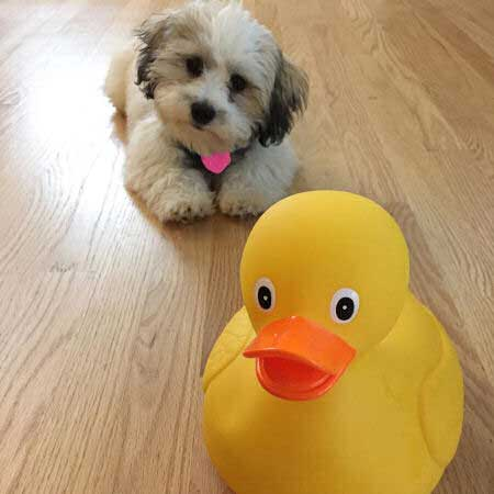 puppy with a duck