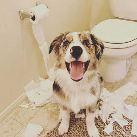 Cute Puppies with a dog that kills the toilet paper