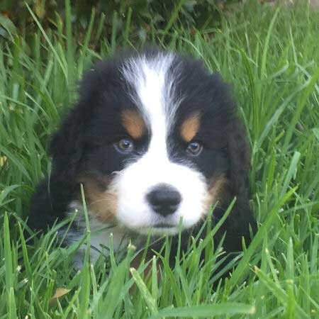 sweet puppy laying in the grass