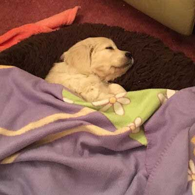 little puppy taking a nap