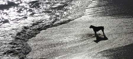 dogs at the beach with a cool black and white sunset beach pooch