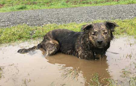 dirty dogs with a Canine submersed in a mud puddle like it's a hot tub.