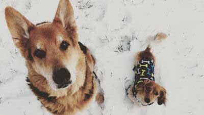 Two different size dogs chilling out in the snow
